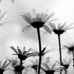 Natuurlijke_plantenextracten